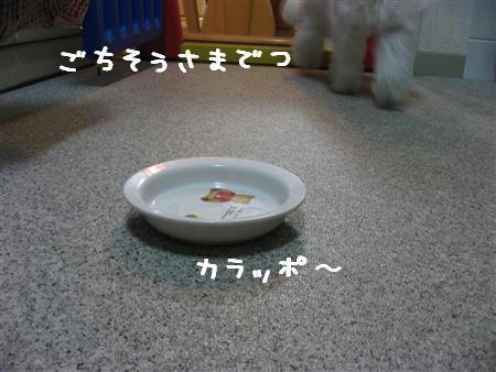 IMG_5600_R.jpg