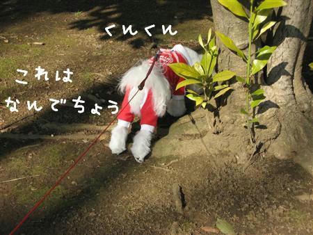 IMG_5824_R.jpg