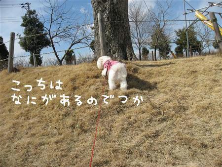 IMG_5993_R.jpg