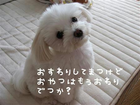 IMG_6064_R.jpg