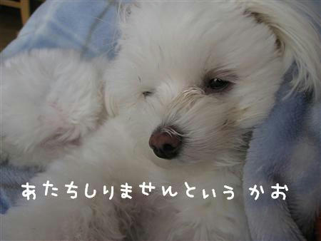 IMG_6068_R.jpg