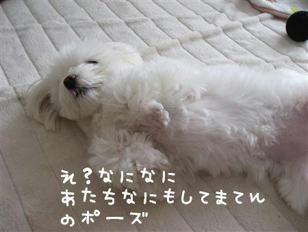 IMG_6077_R.jpg