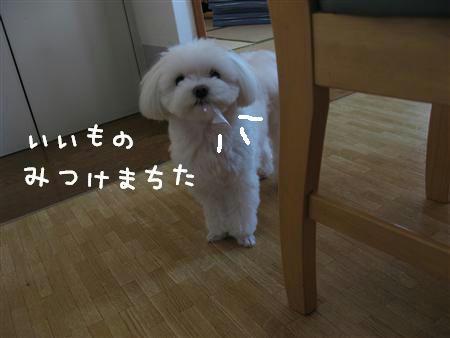 IMG_6228_R.jpg