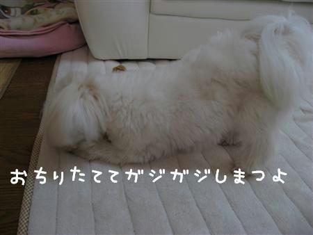 IMG_6230_R.jpg
