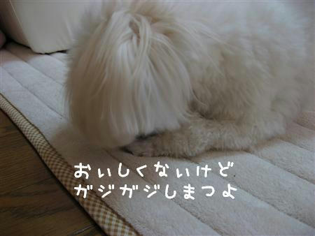 IMG_6231_R.jpg