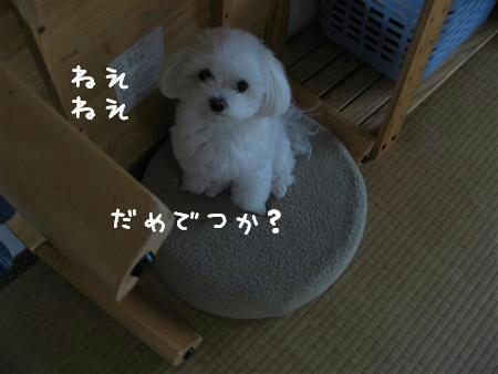 IMG_6249_R.jpg
