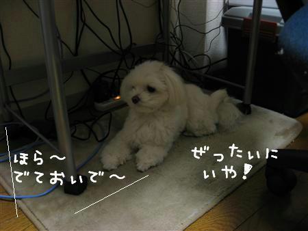 IMG_6244_R.jpg
