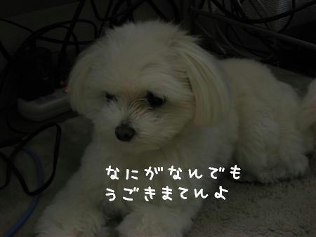 IMG_6245_R.jpg