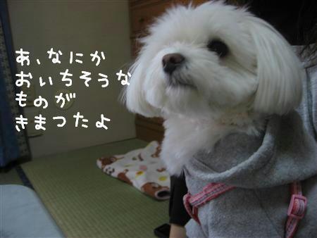 IMG_6291_R.jpg