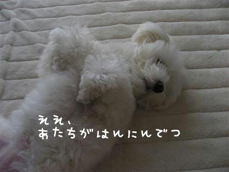 IMG_6428_R.jpg
