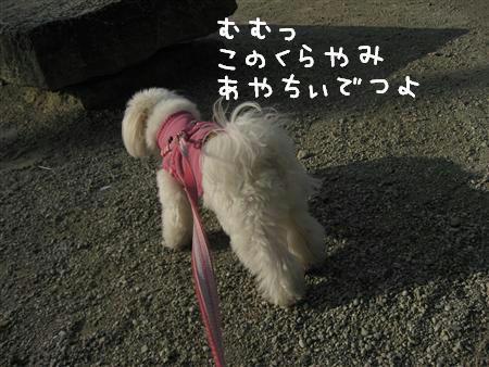 IMG_6437_R.jpg