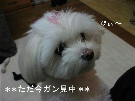 IMG_6516_R.jpg