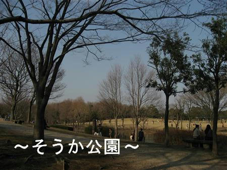 IMG_6590_R.jpg