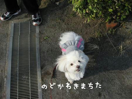 IMG_6595_R.jpg