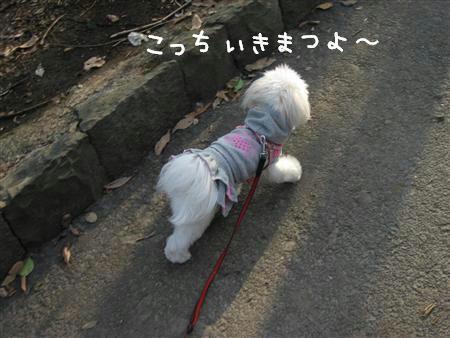 IMG_6599_R.jpg