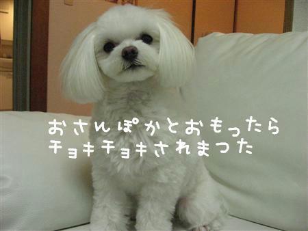 IMG_6943_R.jpg