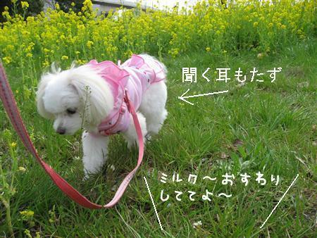 IMG_7013_R.jpg