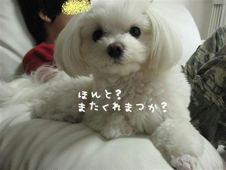 IMG_7229_R.jpg