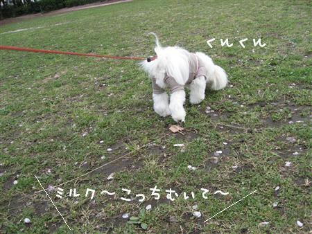 IMG_7244_R.jpg