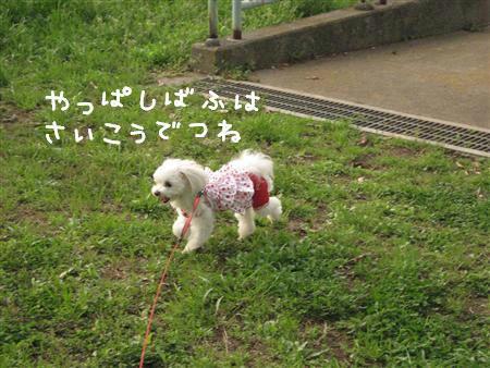 IMG_7440_R.jpg