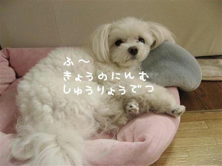 IMG_7701_R.jpg