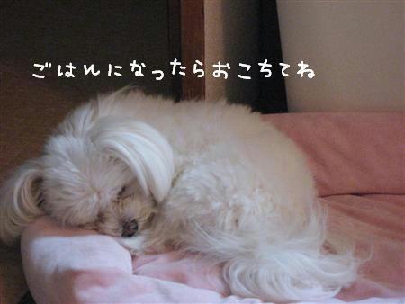 IMG_7743_R.jpg