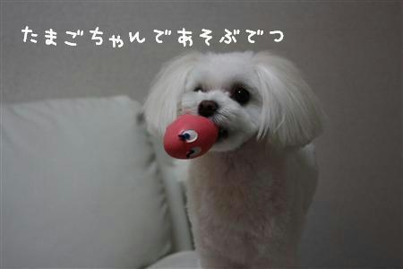 IMG_0017_R.jpg