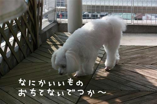 IMG_0410_1_R.jpg