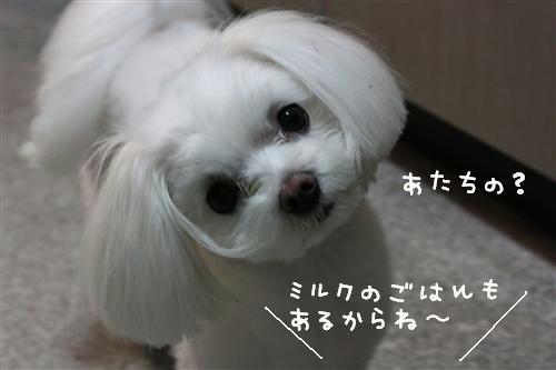 IMG_0491_1_R.jpg