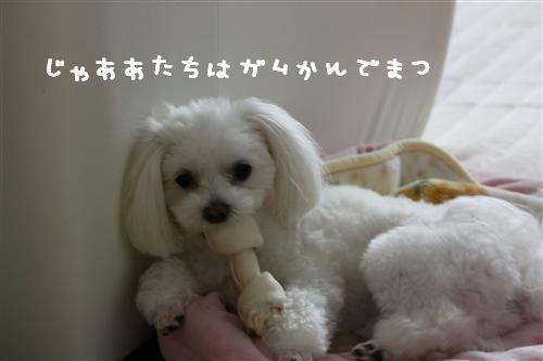 IMG_0536_R.jpg