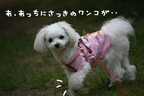 IMG_1087_R.jpg