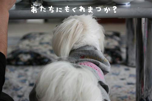 IMG_1168_R.jpg