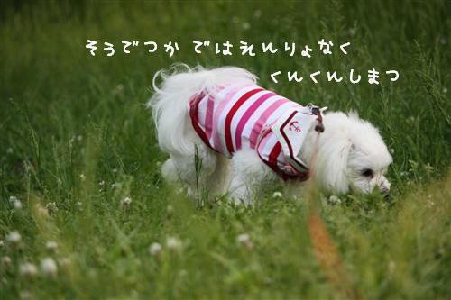 IMG_1264_R.jpg