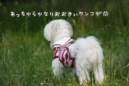 IMG_1258_R.jpg