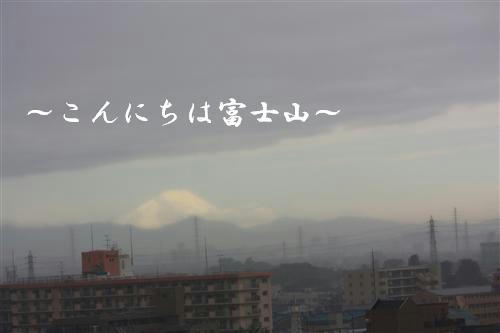 IMG_1595_R.jpg