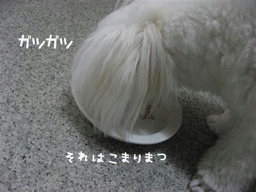 IMG_7920_R.jpg
