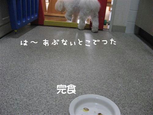 IMG_7922_R.jpg
