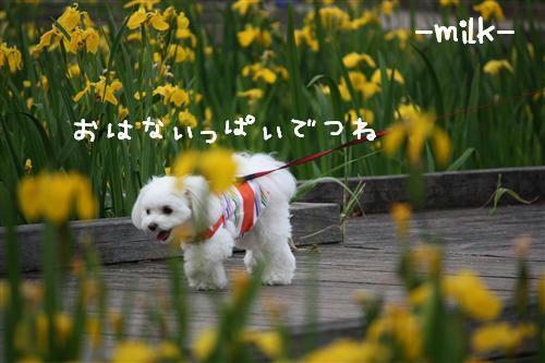 IMG_1706_R.jpg
