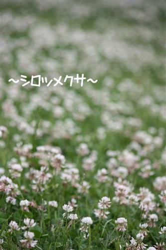 IMG_1766_R.jpg