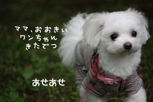 IMG_2235_R.jpg