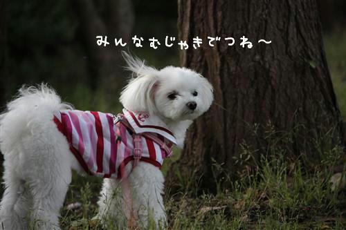 IMG_2875_R.jpg