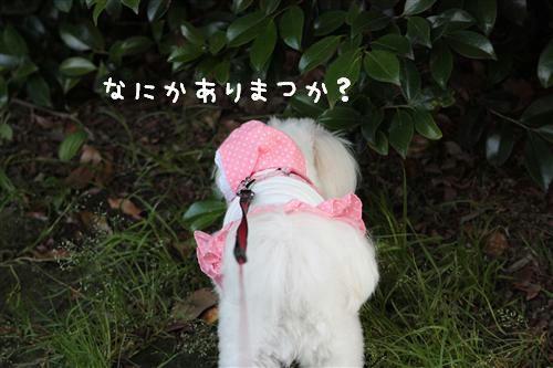 IMG_2981_R.jpg