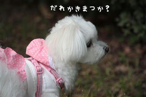 IMG_2994_R.jpg