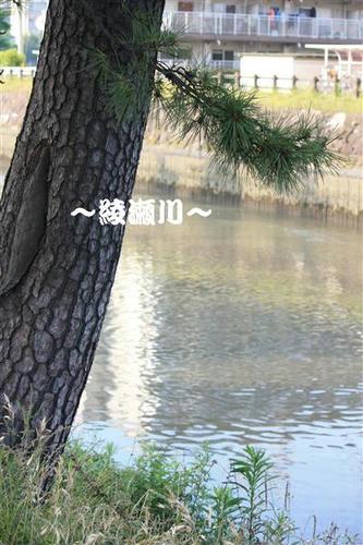 IMG_3341_RR.jpg