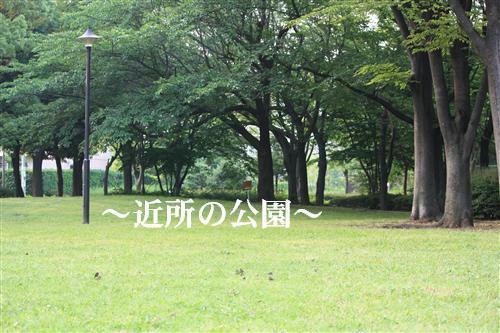 IMG_3478_RR.jpg