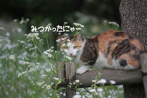 IMG_3828_RR.jpg