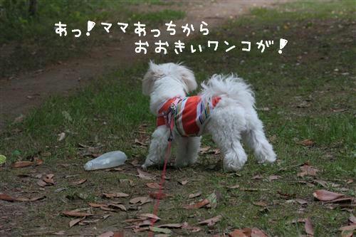 IMG_3849_RR.jpg