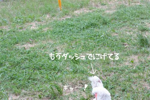 IMG_3851_RR.jpg