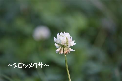 IMG_5086_RR.jpg