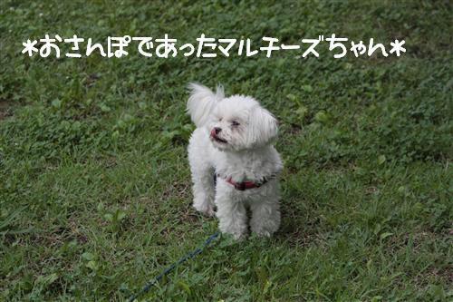 IMG_5615_RR.jpg